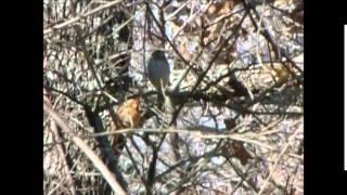 Nonton Bird hunt#1 with the crossman phantom Film Subtitle Indonesia Streaming Movie Download