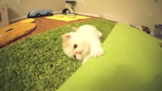 ßızdık pisicik :)))