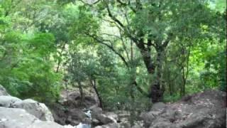 Honduras 2011 Caminata Bosque
