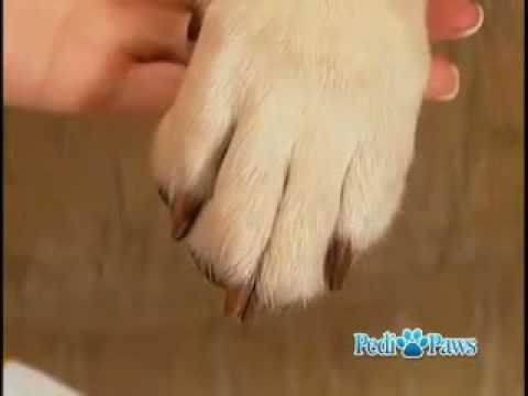 PediPaws - Pet Grooming Clipper As Seen on TV
