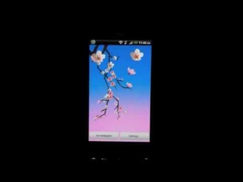 Video of Lovely Sakura Live Wallpaper