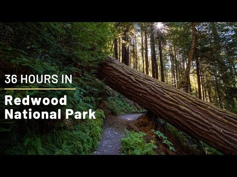 36 Hours in Redwood National Park: Exploring the Best Hikes, Groves and Trees