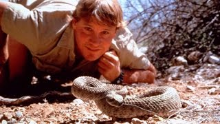 If you come across a venomous snake please keep your distance and contact the proper authority in your location. This video is intended to assist responder's that have to occasionally deal with animal relocation. I hope that this will help everyone involved become an advocate for the safety of animals and the protection of our ecosystem. I am not an expert and am only advising on personal experience. Thank you for taking the time to watch this video.
