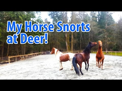 Our Horse Snorts at Deer