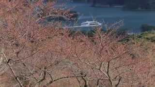 たくさんの松島に会いに行こう。
