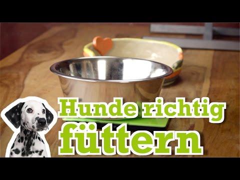 Hunde: Hundeernährung - Hunde richtig füttern - Hundebi ...