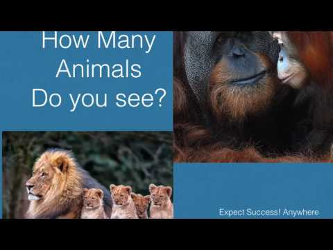 Count the Animals: ExpectSuccess Anywhere School