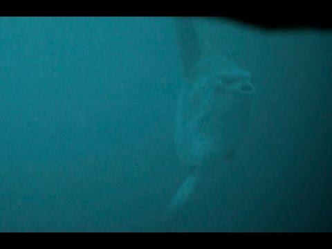 Maanvis gespot door Nautilus Live