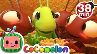 Video The Ant and the Grasshopper | +More Nursery Rhymes & Kids Songs - CoCoMelon MP3, 3GP, MP4, WEBM, AVI, FLV Maret 2019