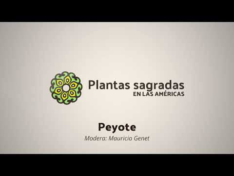 Peyote and Symbolism from an Anthropological Perspective | Plantas Sagradas en las Américas
