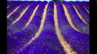 Gordes France  City new picture : English you can use - Roussillon, Gordes, and Lavander Provence, France
