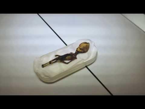 科學家DNA檢測,15公分外星人真的是「人」!