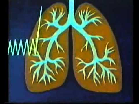 Анатомия человека: Жизненная емкость легких