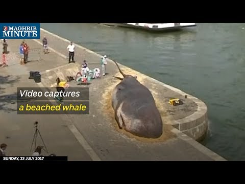Tourists were shocked to see a beached whale on the banks of the river Seine in central Paris on Friday