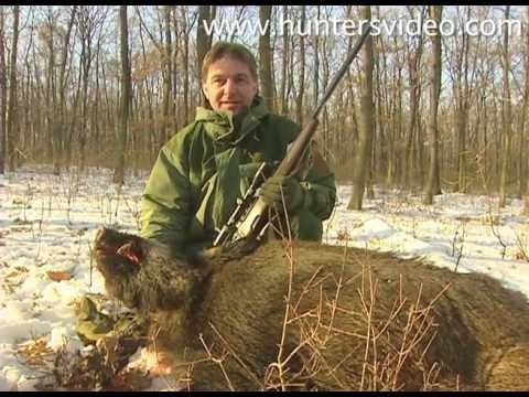 Wild Boar Hunting - Hunters Video