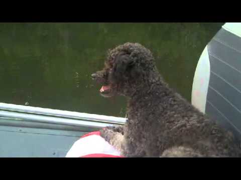 Anaya, Alabama's #1 Fishing Dog
