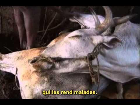 TERRIENS (Earthlings) version originale sous-titrée en français