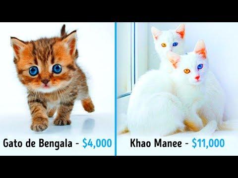 19 Gatos Fabulosos Que Cuestan Una Fortuna