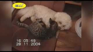 Funny Dog Kissing Cats