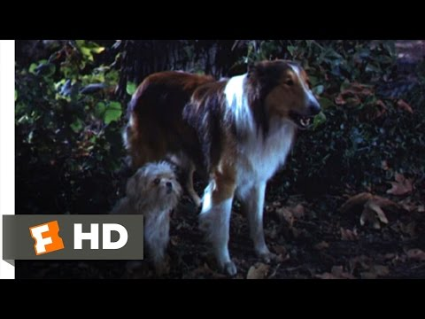 Lassie Come Home (8/10) Movie CLIP - Sticks and Sacrifices (1943) HD