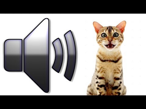 8 HOURS CAT SOUNDS MEOWING NOISES ATTRACT CATS, ANNOY CATS