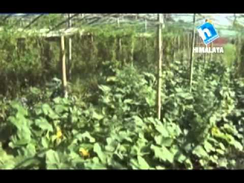 Video Krishi ra Prabidhi 21 Asar 2071_Epi 21 download in MP3, 3GP, MP4, WEBM, AVI, FLV January 2017