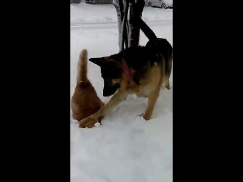 Hassu koira antaa kissalle lumipesun
