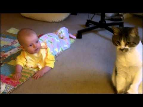 「[ネコ]終始カメラ目線で主の意向を確認するベビーシッター猫が演技派な件。」のイメージ