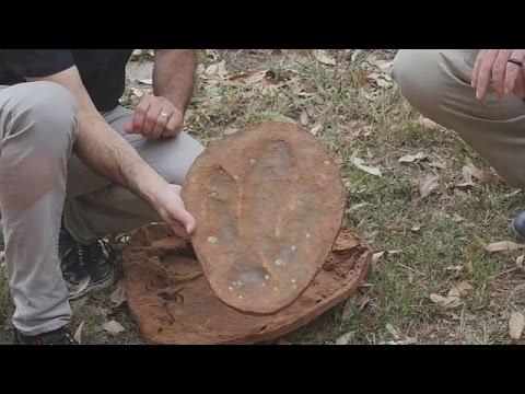 العثور على آثار ديناصورات نادرة بأسراليا