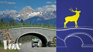 """A better way for animals to cross the road.Subscribe to our channel! http://goo.gl/0bsAjOSources:Highway Wilding: http://www.highwaywilding.org/ARC Solutions: https://arc-solutions.org/Wildlife-Vehicle Collision Reduction Study: Report To Congress: https://www.fhwa.dot.gov/publications/research/safety/08034/exec.cfm#sec01Western Transportation Institute Road Ecology Program: https://westerntransportationinstitute.org/programs/road-ecology/""""How Effective Is Road Mitigation at Reducing Road-Kill? A Meta-Analysis"""" T. Rytwinski et. al: https://www.ncbi.nlm.nih.gov/pubmed/27870889Images:Leanne Allison/Jesse Whittington: https://vimeo.com/57614273Cminna: https://youtu.be/D2yAVuacAoMDKrieger: https://commons.wikimedia.org/wiki/File:Gr%C3%BCnbr%C3%BCcke_B_31.jpgEl-polacio.com: https://youtu.be/E4KpjwcJs24Benjamin P. Y-H. Lee: https://commons.wikimedia.org/wiki/File:Wildlife_overpass_in_Singapore.jpegm01229: https://flic.kr/p/FVDvheMaine Audobon: https://youtu.be/WFUqPffRuEgLarry Lamsa: https://flic.kr/p/Sbe5KMTamsin Mackay: https://youtu.be/AxfLddaWS7gGanesh Raghunathan: https://youtu.be/0bverFVj-OYIsydia Vibes: https://youtu.be/imSMcX16ZzUWashington State Department of Transportation: http://wsdotblog.blogspot.com/2015/06/make-way-for-wildlife-building-i-90.htmlWyoming Department of Transportation: https://youtu.be/slE0wem1z6g///Roadkill harms animals, endangers drivers, and costs billions of dollars every year. In Banff National Park in Alberta, Canada, wildlife scientist Tony Clevenger and other researchers have proven that constructing overpasses and underpasses for animals decreases roadkill and improves ecological connectivity. Many animals, including deer, elk, grizzlies, moose, lynx, cougars and others, have been recorded using the structures. Although animal crossing structures have been fairly common in Europe for a few decades, there are relatively few in North America. In The United States, the crossing structures that have been built, in places like Washington """