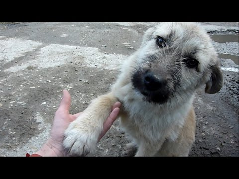 Puppy Abandoned On Side Of Road Rescued Just In Time