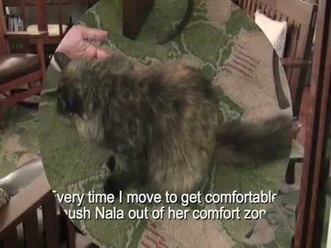 Animal Reiki on a cat