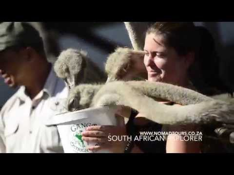 21 Days South African Explorer (English or Ge...