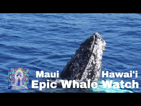 Maui Whale Watch - The Best!