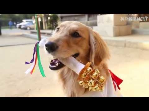 ワンワン神楽舞 ペット犬の七五三詣
