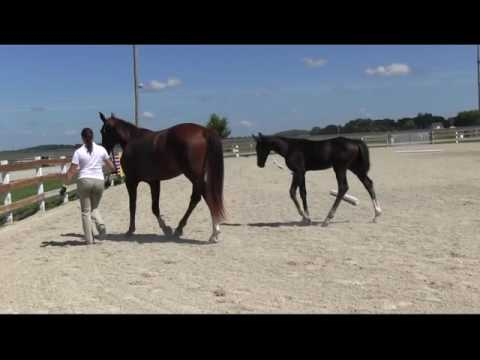 Seline 2016 inspection with colt