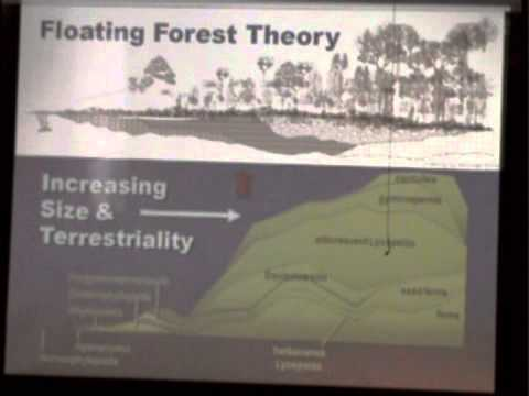 Floating Forests: An Example of Creation Model-Building – Dr. Kurt Wise