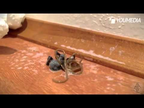 ragno - Un uomo dopo aver ucciso un ragno che si trovava a casa sua in Australia, vede uno spettacolo orribilante, dal corpo del ragno morto esce un qualcosa. All'in...