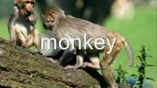 Animals English vocabulary Exercise