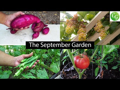The September Garden - Plenty Of Harvests & Fall Gardening Preps!
