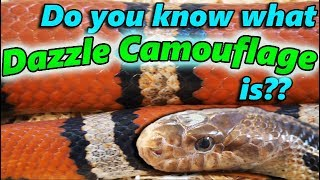 The 6 Types of Camouflage and Mimicry (as seen in reptiles) by Snake Discovery