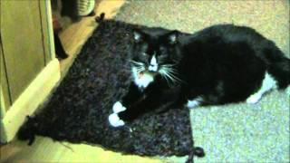 Magic on Kitty Bed 1-1-13