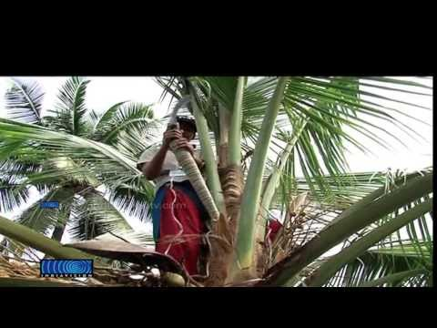 Neera Production opens a new window of hope for coconut farmers
