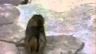 Video de risa para whatsApp-1