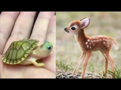 Lets Have Some Fun With Adorable Animals!
