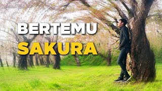 Video Bertemu Sakura MP3, 3GP, MP4, WEBM, AVI, FLV Juni 2017