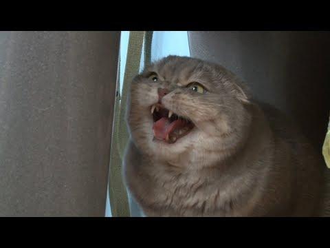 Первого марта в России отмечают день кошек