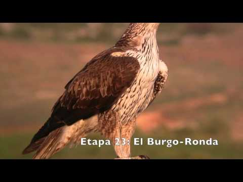 Vögel des Großen Weg von Malaga (GR 249). Die Schritte 18 bis 26