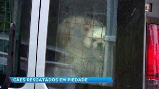 Voluntários resgatam cães de canil interditado em Piedade
