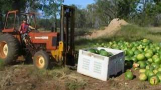 Charters Towers Australia  city images : Travel Videos: Farm Work - Charters Towers, Australia (2010)